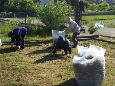 わんぱく公園清掃1